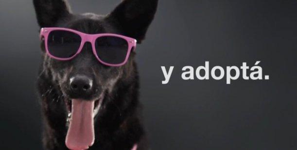 Una nueva productora audiovisual lanza su campaña para salvar perros callejeros